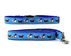 Collar & Leash: Papillon