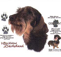 Hair Shirt - Shirts Dachshund Wire Hair