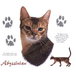 Abyssinian Cat T-Shirts