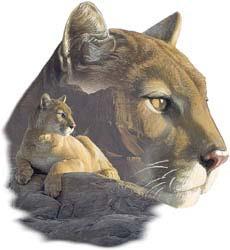 Cougar T-Shirts