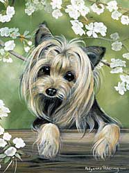 7338 Flag: Yorkshire Terrier