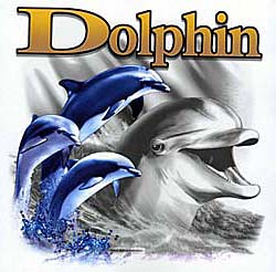 Happy Dolphin Tee Design