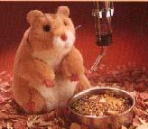 Hamster Puppet
