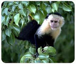 Mousepad: Monkey