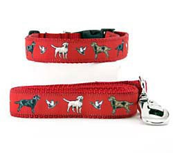 Labrador Collar & Leash