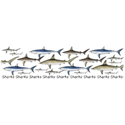 Shark T-Shirt - Collage