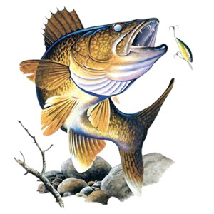 Walleye T-Shirt - Collage