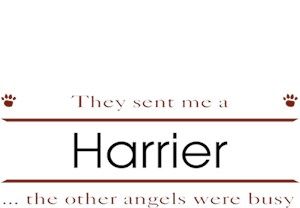 Harrier T-Shirt - Other Angels