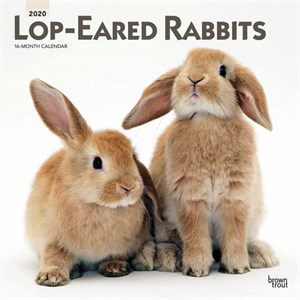  Lop-Eared Rabbits Calendar 2013
