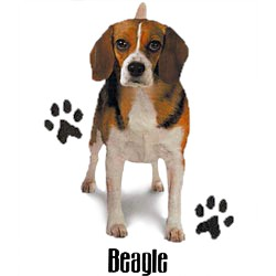 Beagle T-Shirt - Stylin With Paws