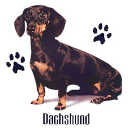 Black & Tan Dachshund T-Shirt - Stylin With Paws
