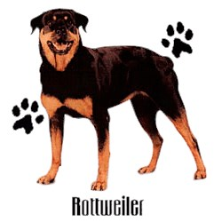 Rottweiler T-Shirt - Stylin With Paws