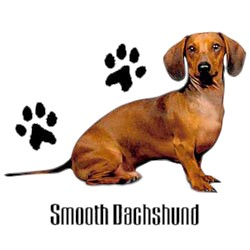 Dachshund T-Shirt - Stylin With Paws