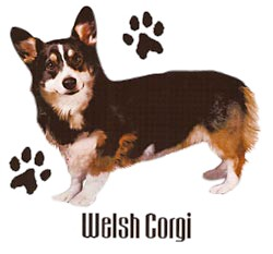 Corgi T-Shirt - Stylin With Paws
