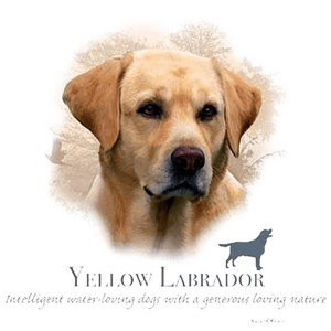 Yellow Lab T-Shirt - My Best Friend Is