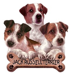 Jack Russell Terrier T-Shirt - Trio of Three