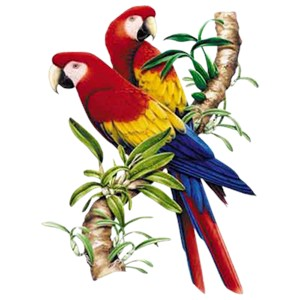 Macaw T-Shirt - Bold and Colorful