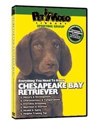 Chesapeake Bay Retriever Video