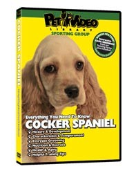 Cocker Spaniel Video