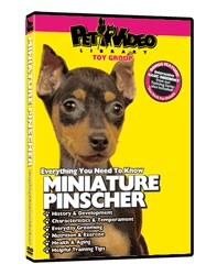 Miniature Pinscher Video