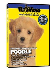Poodle Video