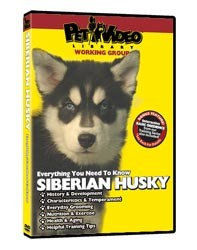 Siberian Husky Video