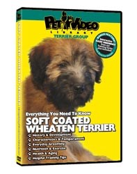 Wheaten Terrier Video