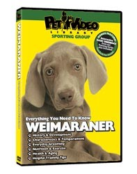 Weimaraner Video