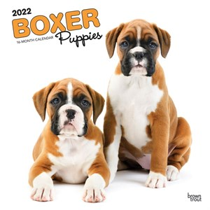 Boxer Puppies Calendar 2013