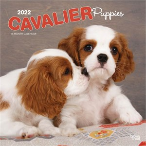  Cavalier King Charles Puppies Calendar 2013