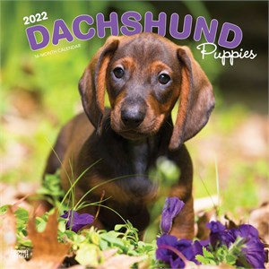 Dachshund Puppies Calendar 2013