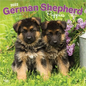 German Shepherd Puppies Calendar 2013