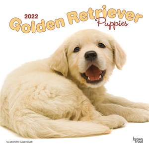  Golden Retriever Puppies Calendar 2013