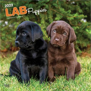 Labrador Retriever Puppies Calendar 2013
