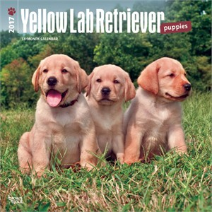 Yellow Lab Puppies Calendar 2013