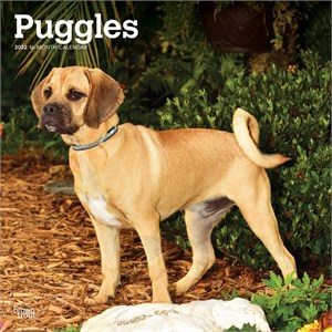  Puggle Calendar 2013