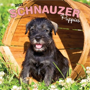  Schnauzer Puppies Calendar 2013