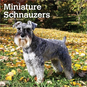  Miniature Schnauzer Calendar 2013