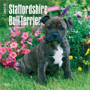 Staffordshire Bull Terrier Puppies Calendar 2013