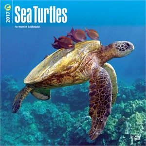 Sea Turtles Calendar 2013