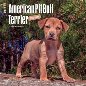 Pit Bull Terrier Puppies Calendar 2013