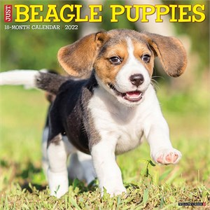  Beagle Puppies Calendar 2013