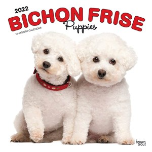  Bichon Frise Puppies Calendar 2013