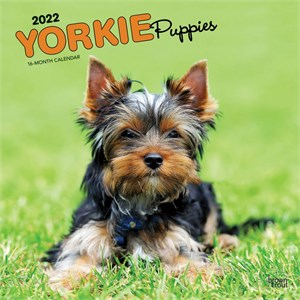  Yorkshire Terrier Puppies Calendar 2013