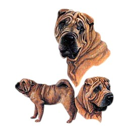 Shar Pei T-Shirt - Best Friends
