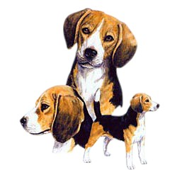 Beagle T-Shirt - Best Friends