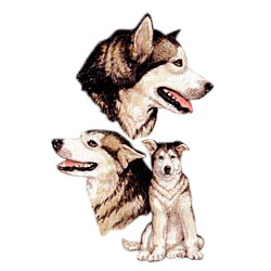 Alaskan Malamute T-Shirt - Best Friends