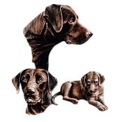 Chocolate Lab T-Shirt - Best Friends