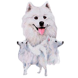 Samoyed T-Shirt - Best Friends