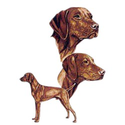 Vizsla T-Shirt - Best Friends